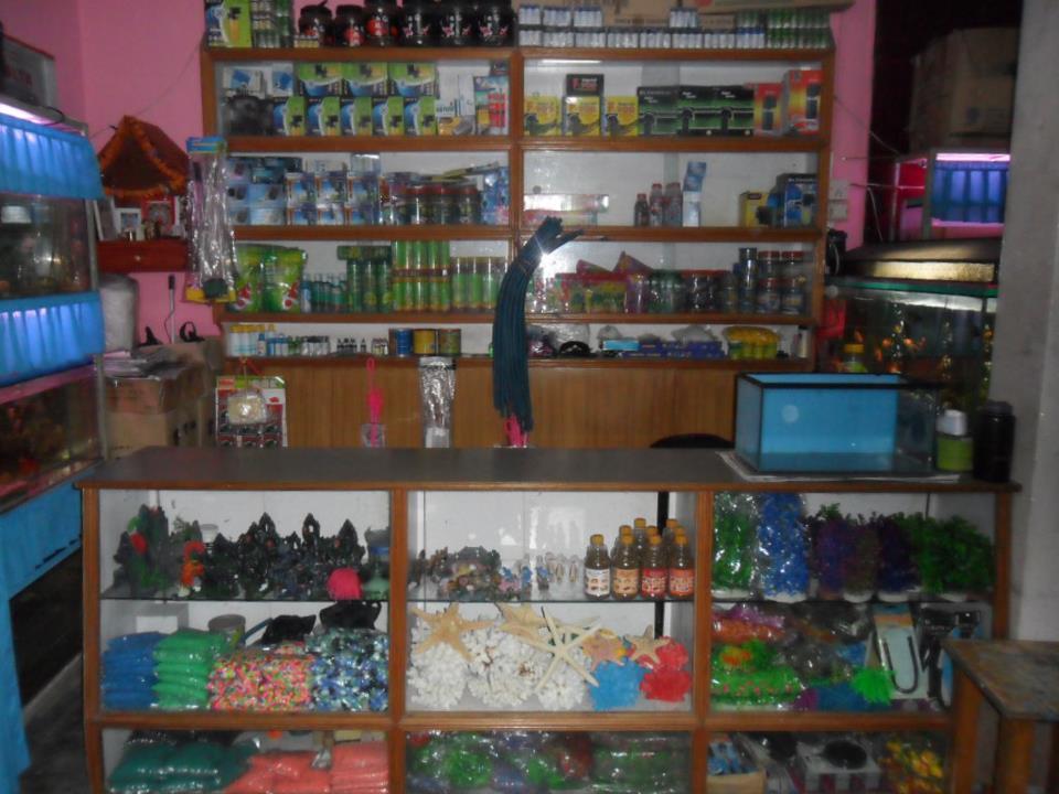 A one aquarium shop uno for Aquarium shop